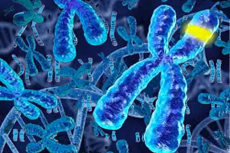 DNA, Kromosomer og Gener, hva er det?