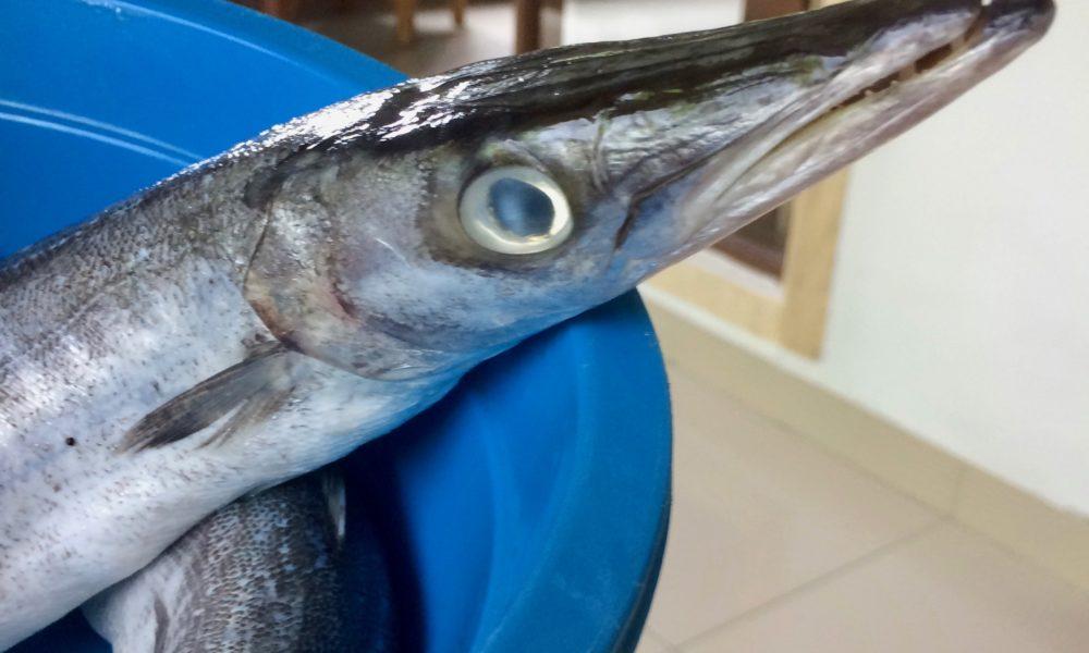 Paleo Barracuda med lav-karbo ris